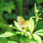 Flora und Fauna am Baikalsee